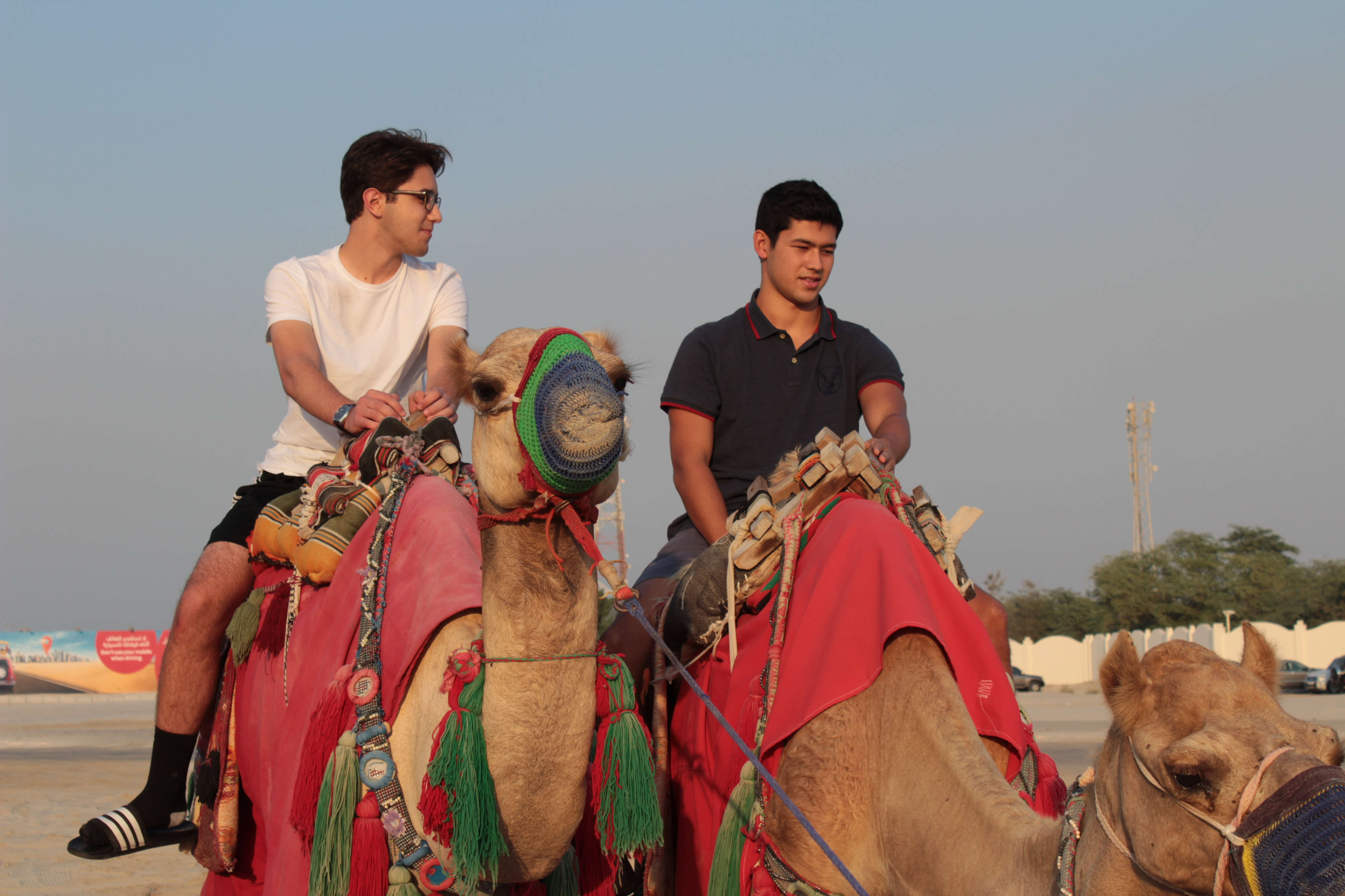 2 male students riding camels